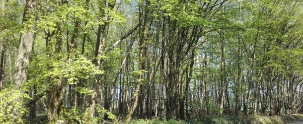 Forêt régionale de Montgé : sécurisation des abords de la RD 41
